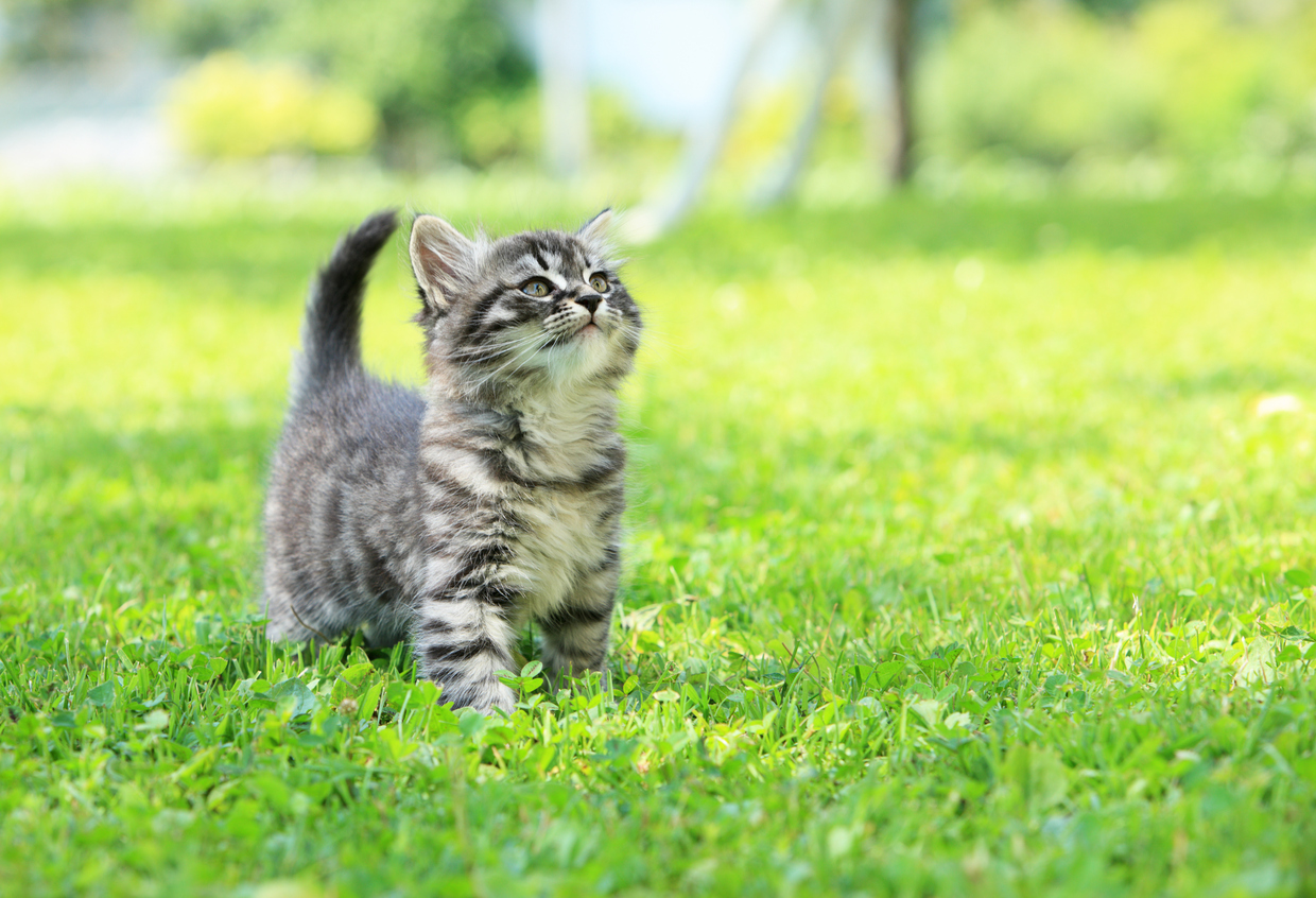 How To Keep Your Cat Safe And Happy Outdoors